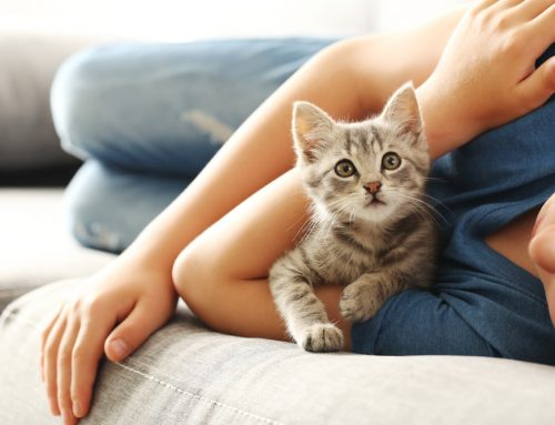 Starting Off On the Right Paw: Your Kitten's First Year