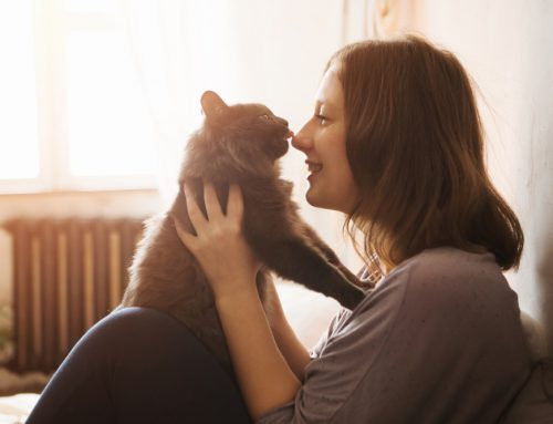 Caring For Our Feline Friends