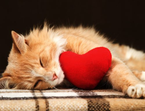 Heart Disease in Pets: Early Detection = Better Outcomes